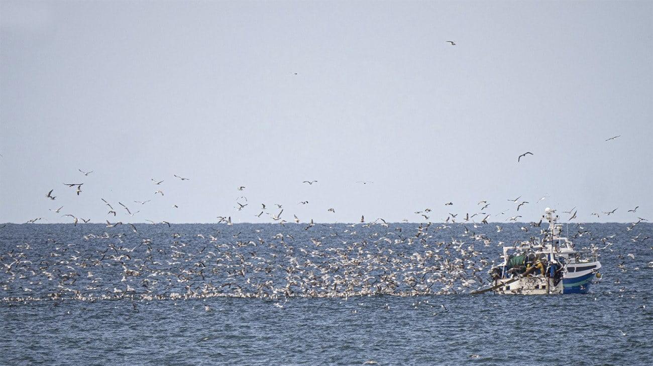 Imagem de barco de pesca e aves marinhas