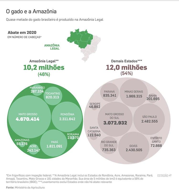 Infográfico mostra gado na Amazônia