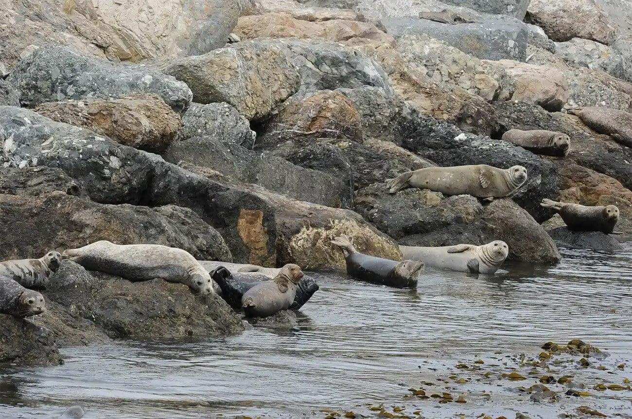 Imagem de leões marinhos