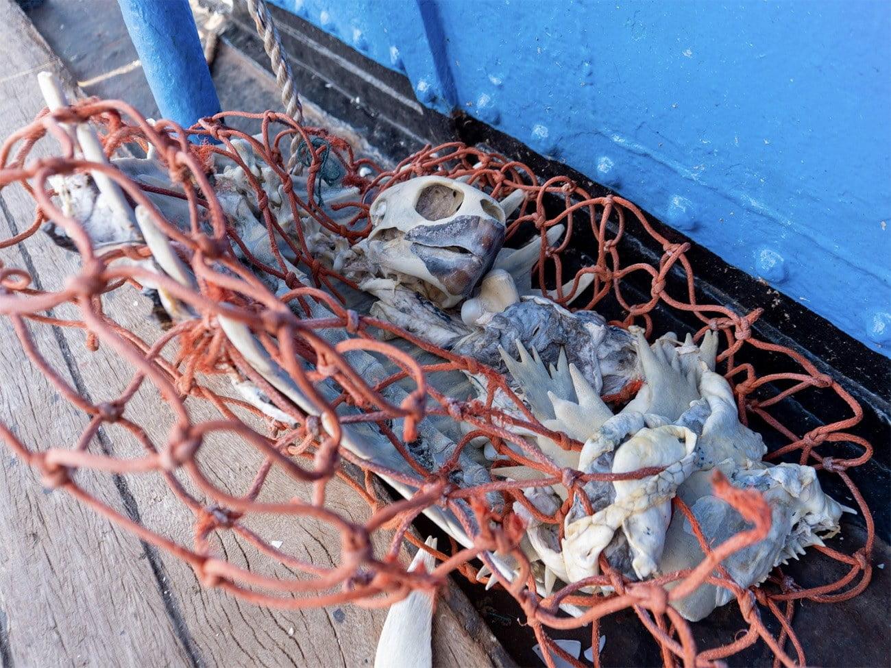 Imagem de rede com pedaços de corais