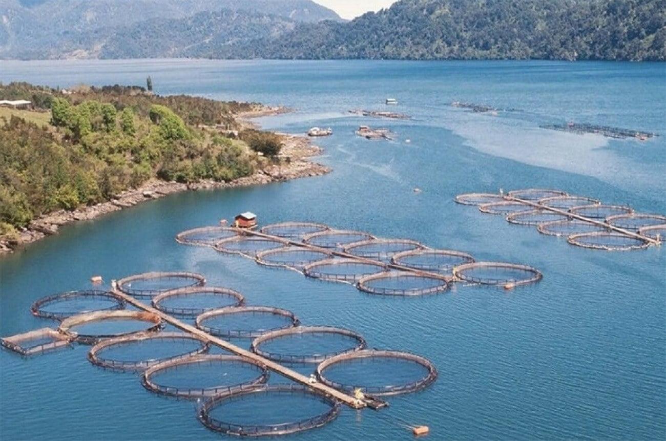 Imagem e fazenda de salmão