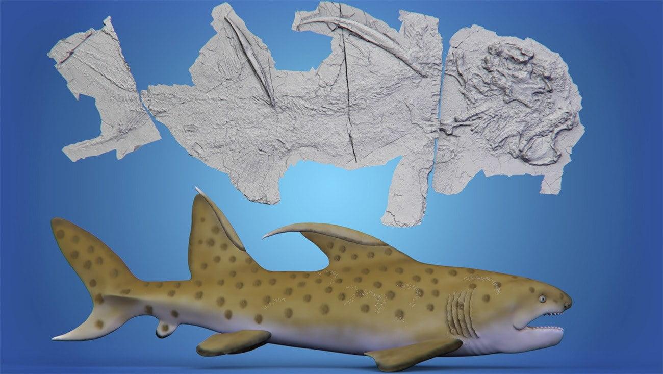 Imagem de fóssil de tubarão