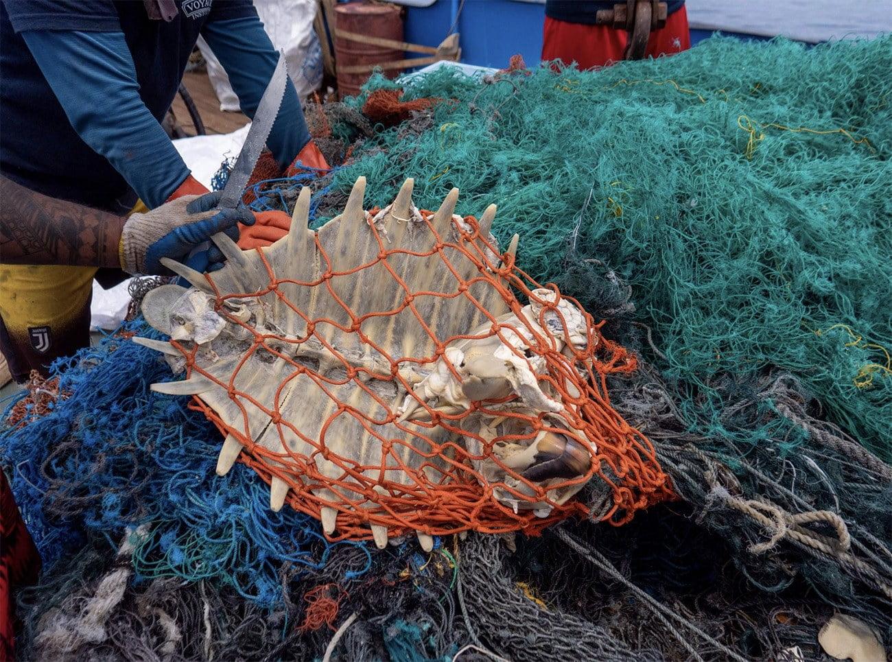 Imagem de tartaruga presa em rede