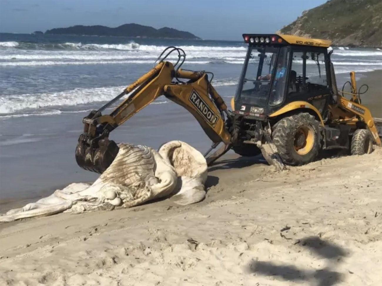 Imagem de trata em praia com carcaça de baleia