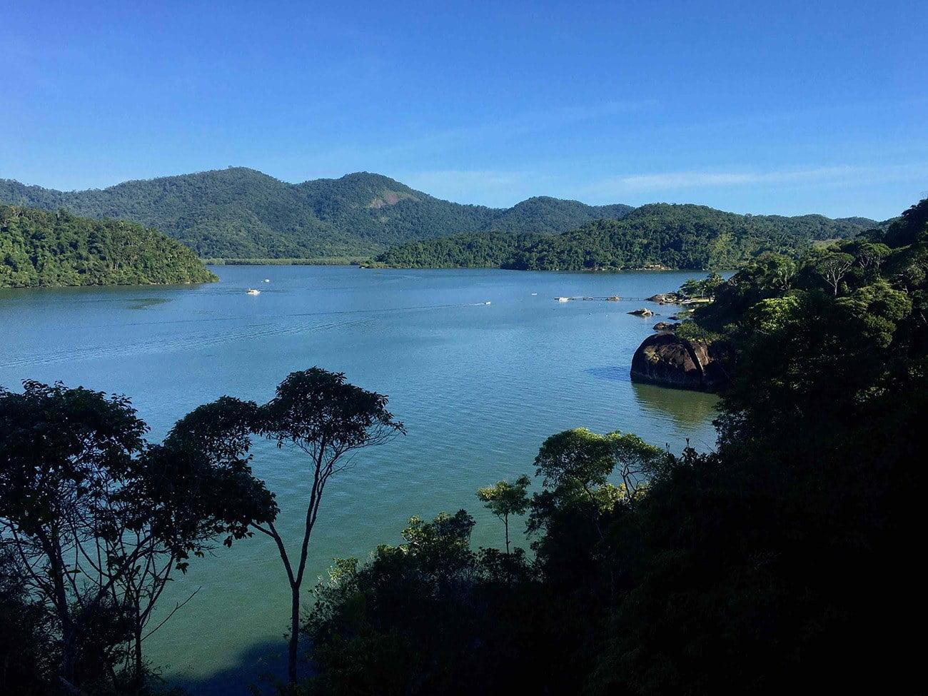 Imagem do manguezal do saco do Mamanguá