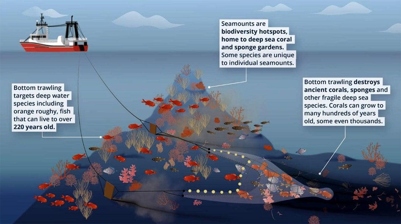Ilustração mostra arrasto de fundo e corais