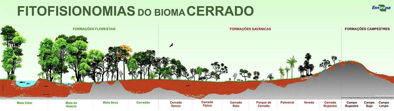 Infográfico mostra as fisionomias do Cerrado