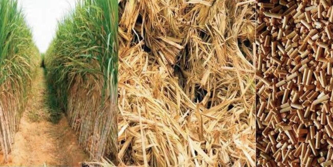 Imagem e biomassa de cana de açúcar