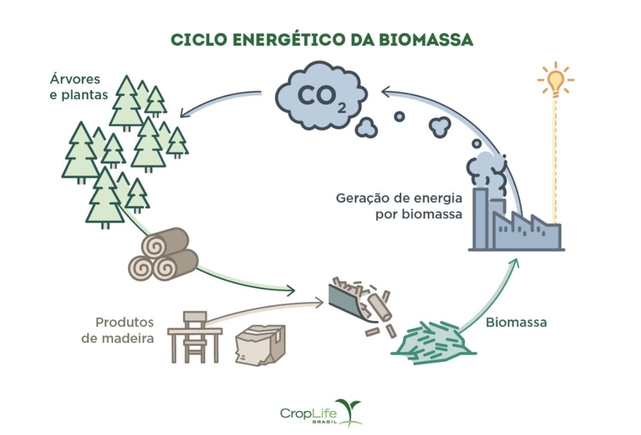 infográfico mostra cinco da biomassa