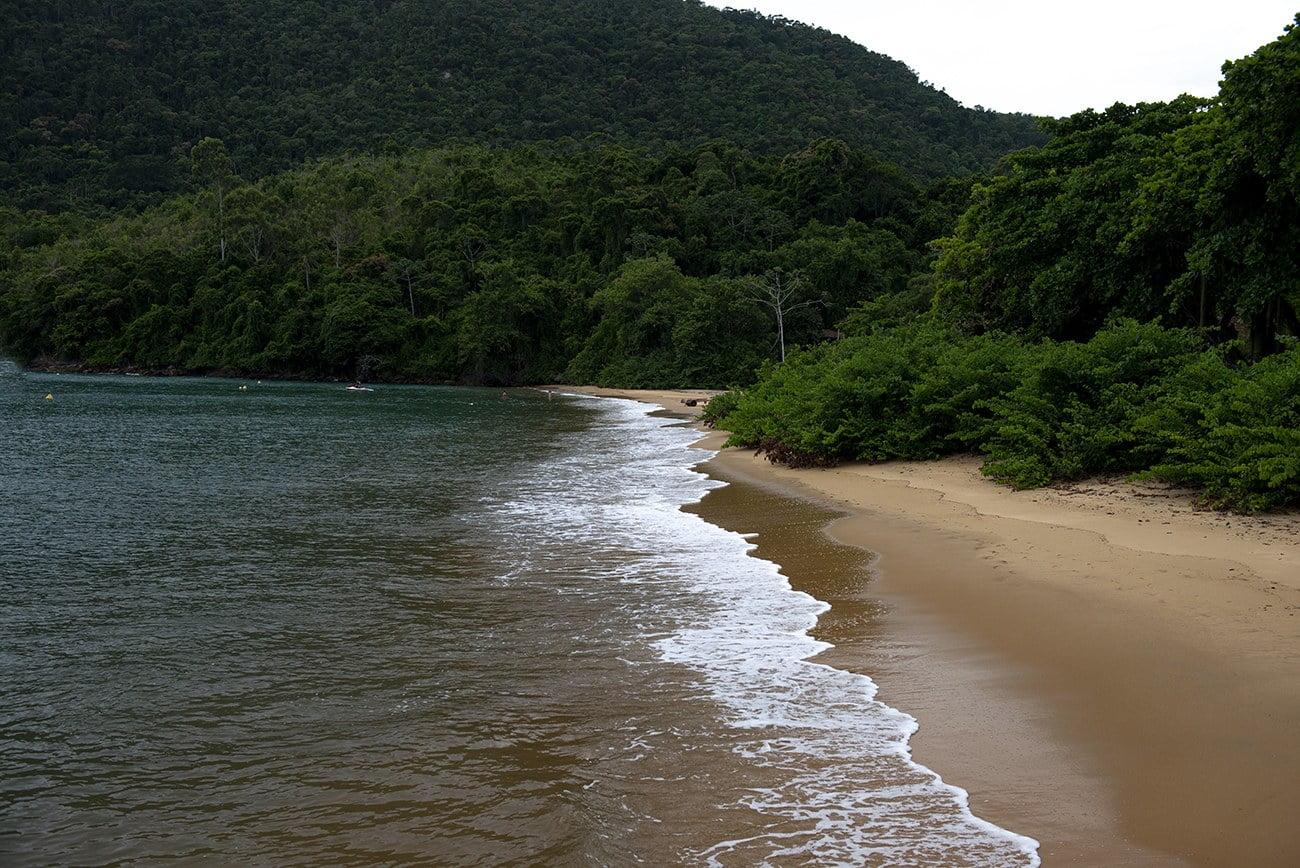 Imagem de Mata Atlântica da Ilha Anchieta.