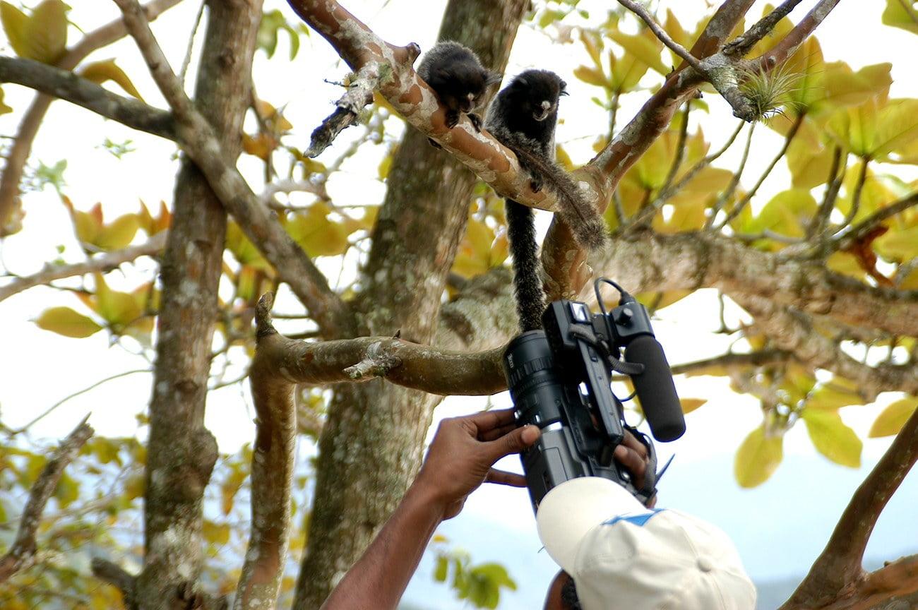 Imagem de saguis na Ilha Anchieta