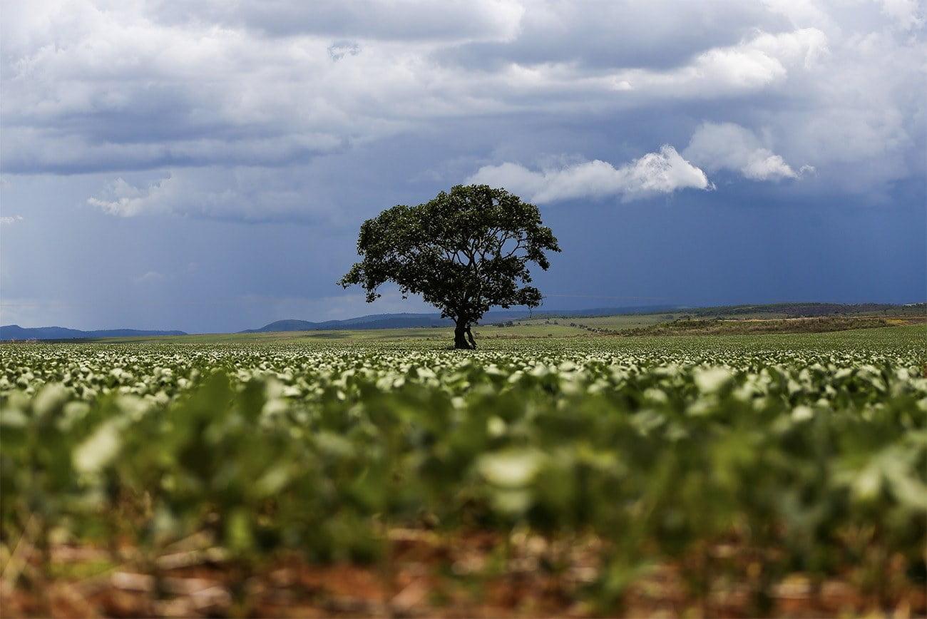 Imagem da soja no Cerrado