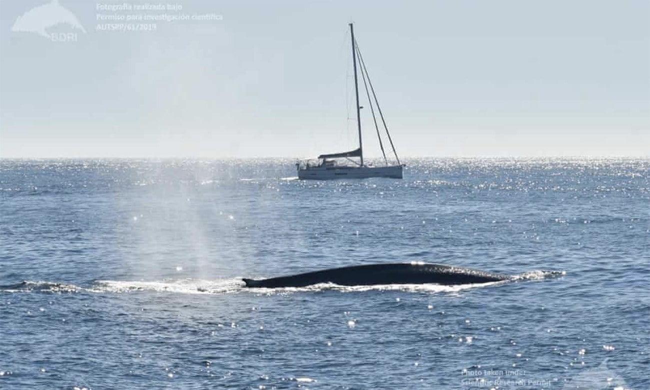 Imagem de baleia azul