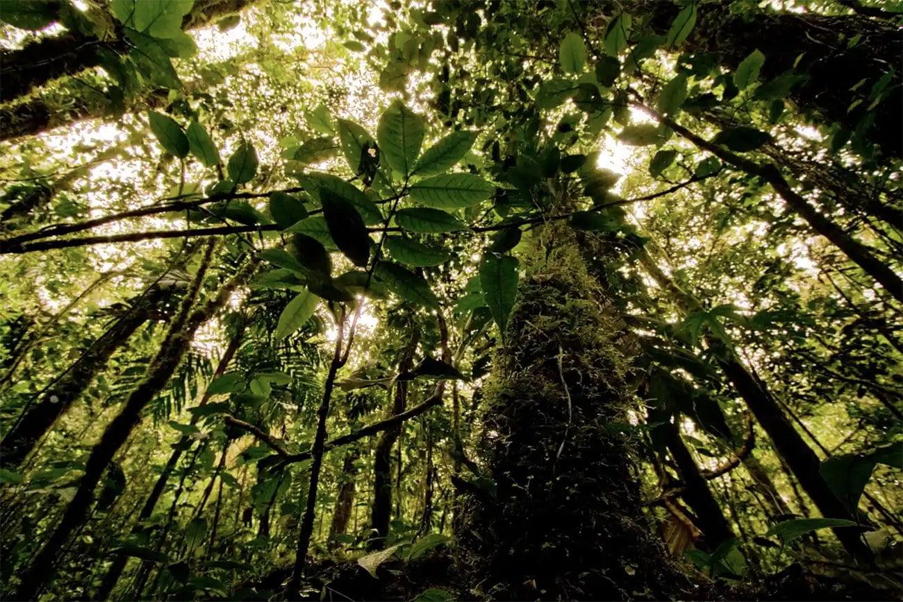 Imagem de floresta tropical