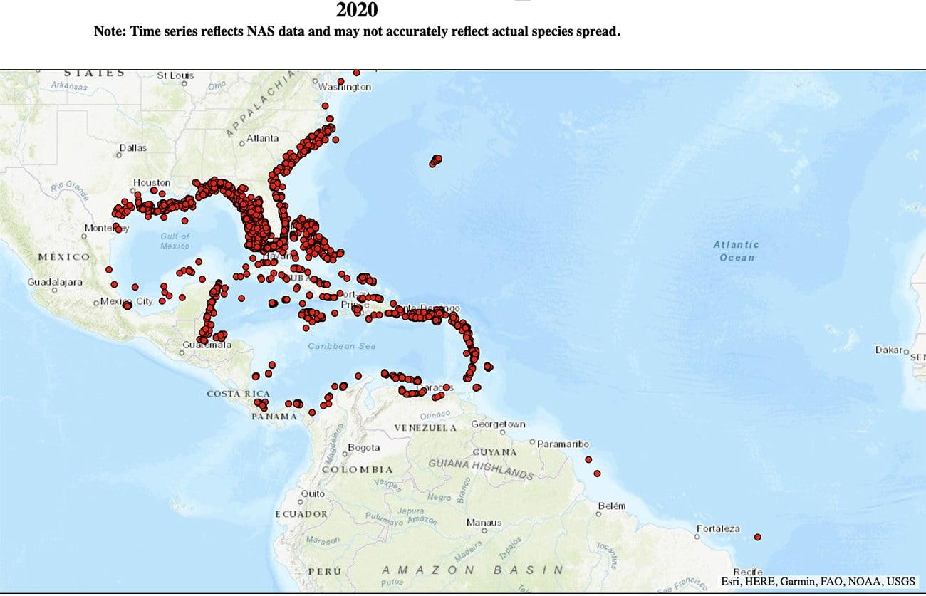 Mapa mostra proliferação do peixe-leão no Caribe.