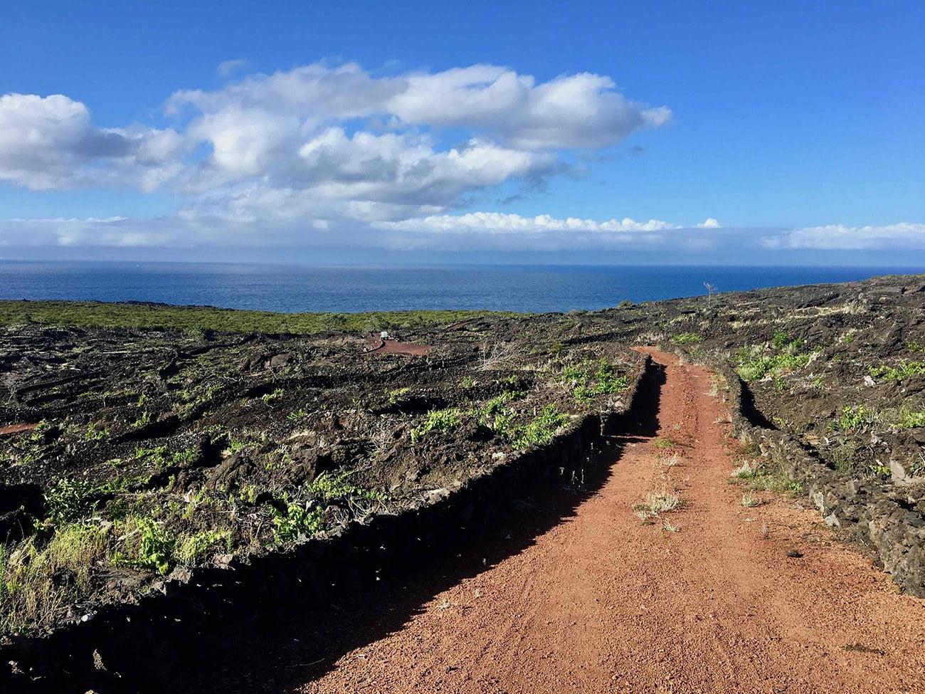 Imagem dos vinhedos da ilha do Pico