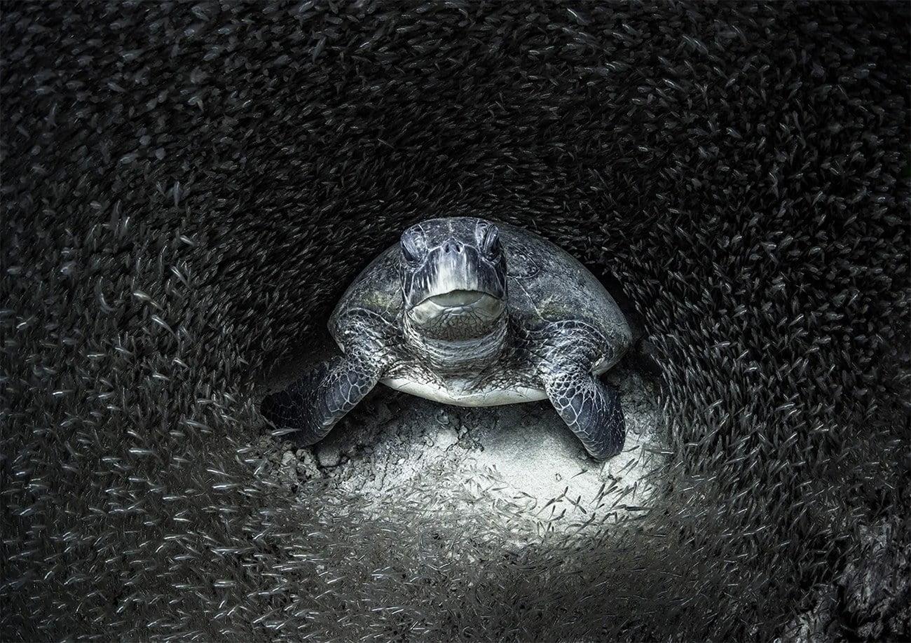 foto submarina de tartaruga verde